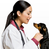 Pet Clinics in the U.S.